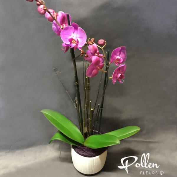 Orchidée à deux branche à offrir et a faire livrer à Le Mans