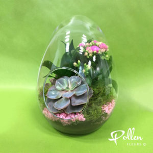 Terrarium en verre. 3 plantes vertes