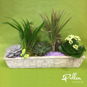Assemblage de 5 plantes vertes