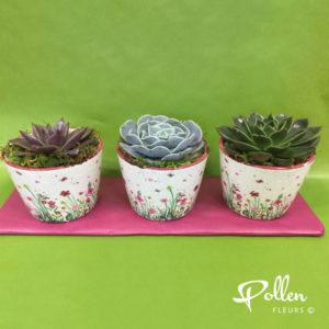Trio de plantes grasses